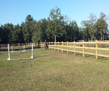 Boarding Horses in Charleston, AQHA, Riding Lessons  Kids